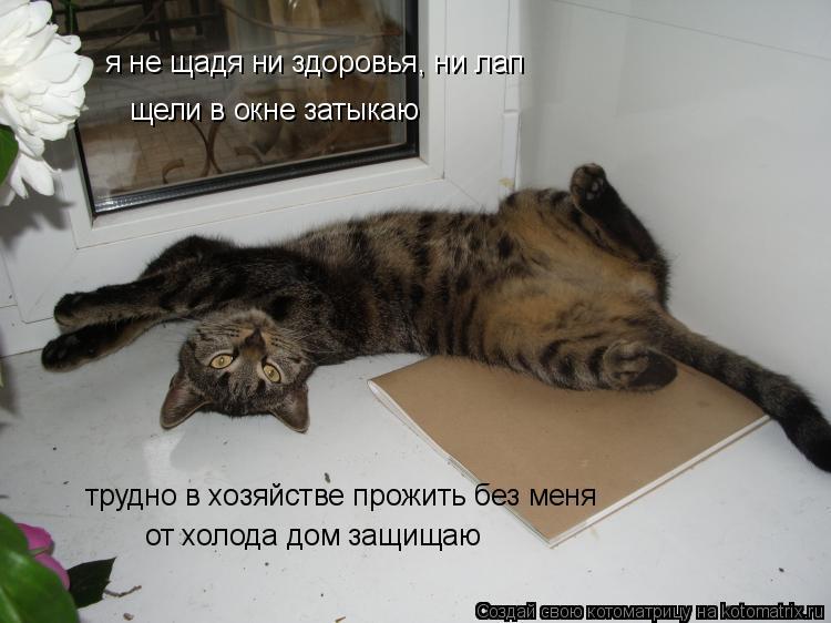 Котоматрица: я не щадя ни здоровья, ни лап щели в окне затыкаю трудно в хозяйстве прожить без меня от холода дом защищаю