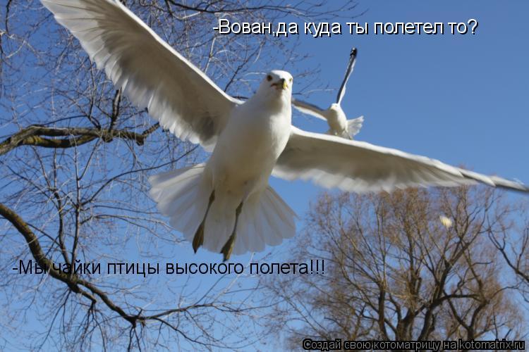 Котоматрица: -Мы чайки птицы высокого полета!!! -Вован,да куда ты полетел то?