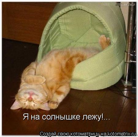 Котоматрица: Я на солнышке лежу!...