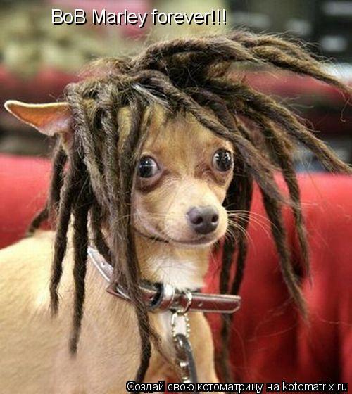 Котоматрица: BoB Marley forever!!!