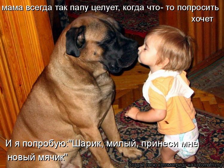 """Котоматрица: мама всегда так папу целует, когда что- то попросить хочет И я попробую:""""Шарик, милый, принеси мне  новый мячик"""""""