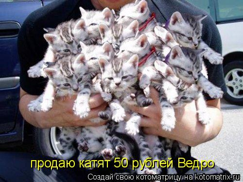 Котоматрица: продаю катят 50 рублей Ведро