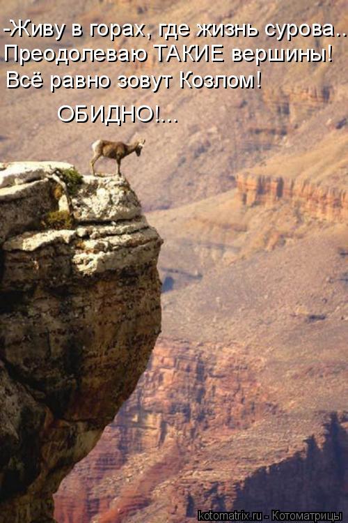 Котоматрица: -Живу в горах, где жизнь сурова... Преодолеваю ТАКИЕ вершины! ОБИДНО!... Всё равно зовут Козлом!