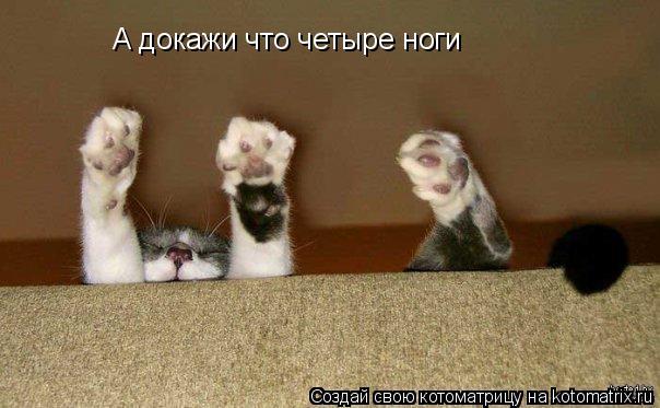 Котоматрица: А докажи что четыре ноги