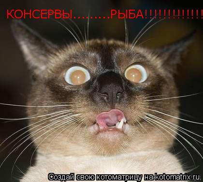 Котоматрица: КОНСЕРВЫ.........РЫБА!!!!!!!!!!!!!