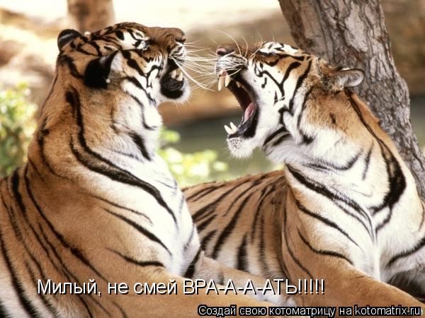 Котоматрица: Милый, не смей ВРА-А-А-АТЬ!!!!!