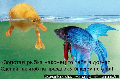 Котоматрица: -Золотая рыбка,наконец то тебя я догнал! Сделай так чтоб на праздник я блюдом не стал!