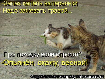 Котоматрица: -Про походку если спросят?  -Опьянён, скажу, весной! -Запах капель валерьянки  Надо зажевать травой...