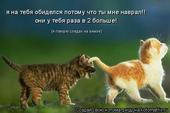 Котоматрица: я на тебя обиделся потому что ты мне наврал!! (я говорю следах на земле) они у тебя раза в 2 больше!