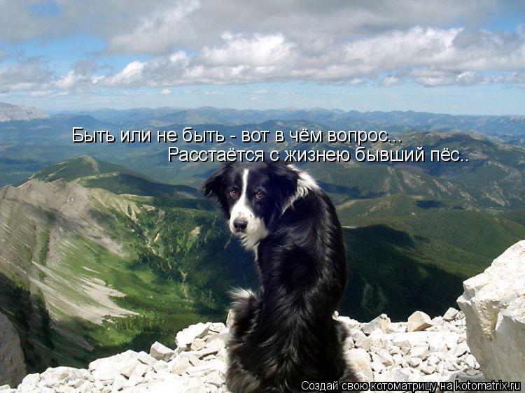 Котоматрица: Быть или не быть - вот в чём вопрос... Расстаётся с жизнею бывший пёс..