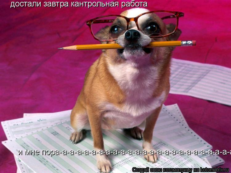 Котоматрица: достали завтра кантрольная работа и мне пора-а-а-а-а-а-а-а-а-а-а-а-а-а-а-а-а-а-а-а-а-а-а-а-а