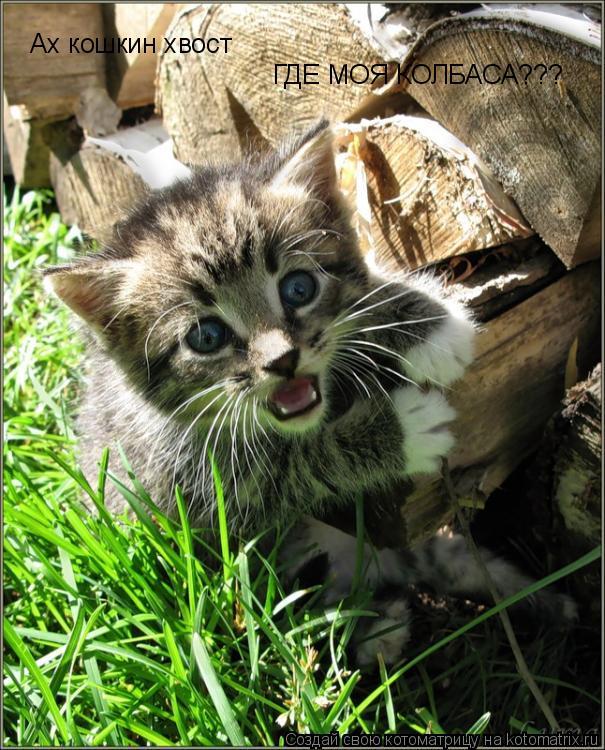 Котоматрица: Ах кошкин хвост ГДЕ МОЯ КОЛБАСА???