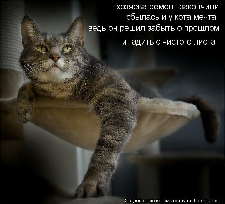 Котоматрица: хозяева ремонт закончили, сбылась и у кота мечта, ведь он решил забыть о прошлом и гадить с чистого листа!