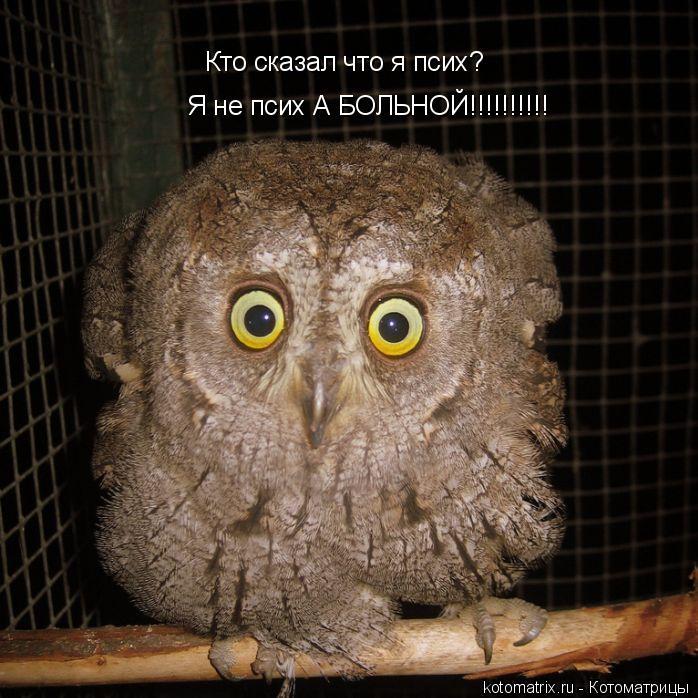 Котоматрица: Кто сказал что я псих? Я не псих А БОЛЬНОЙ!!!!!!!!!!