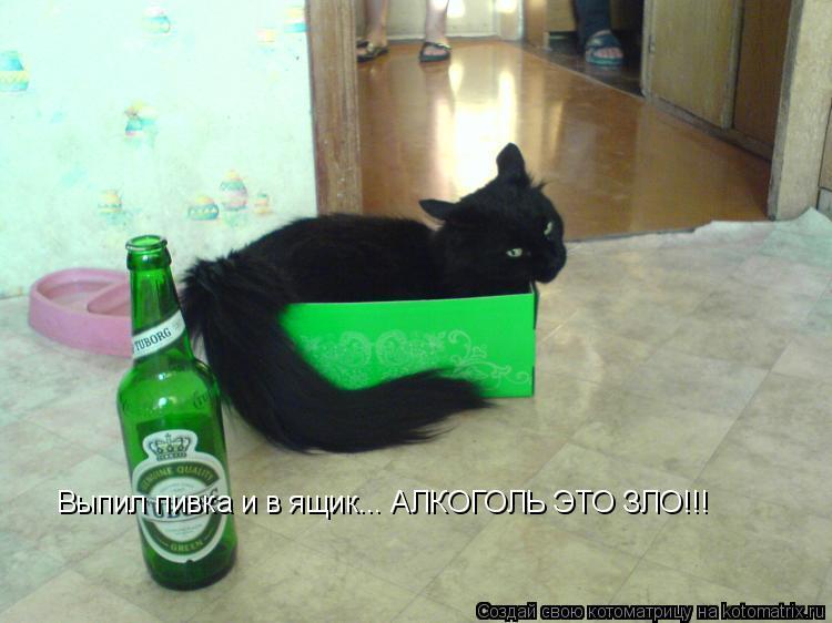 Котоматрица: Выпил пивка и в ящик... АЛКОГОЛЬ ЭТО ЗЛО!!!