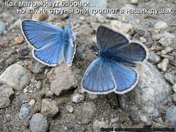 Котоматрица: -Как мало живут бабочки... но какие струны они трогают в наших душах.