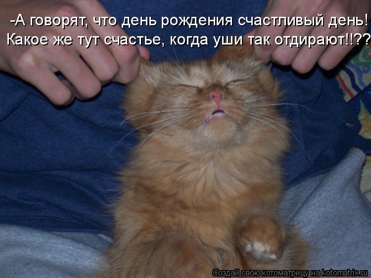 Котоматрица: -А говорят, что день рождения счастливый день! Какое же тут счастье, когда уши так отдирают!!??
