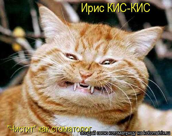 "Котоматрица: Ирис КИС-КИС ""Чистит"" как стоматолог..."