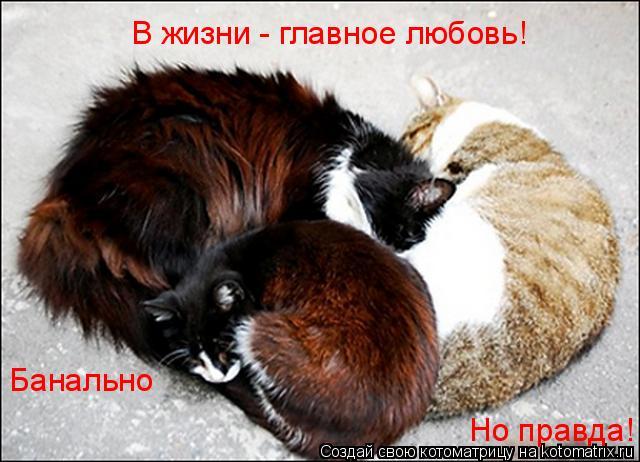 Котоматрица: В жизни - главное любовь! Банально Но правда!