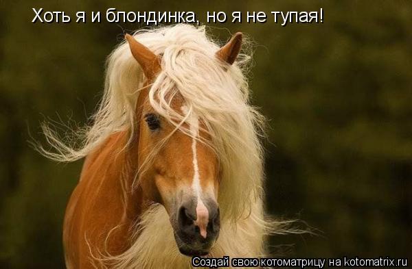 Котоматрица: Хоть я и блондинка, но я не тупая!