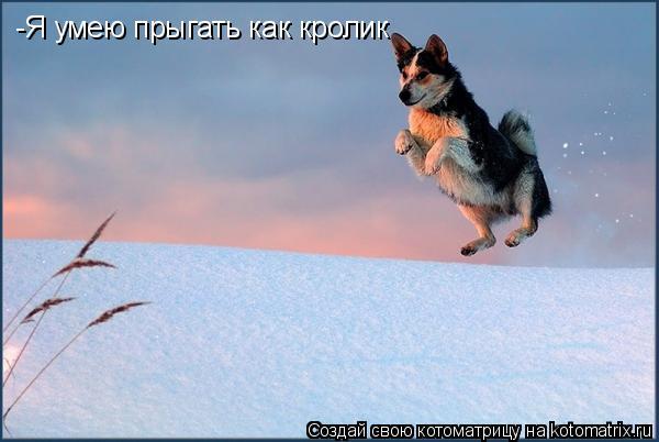 Котоматрица: -Я умею прыгать как кролик
