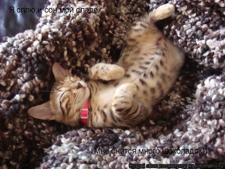Котоматрица: Я сплю,и сон мой сладок Мне снится много шоколадок)))