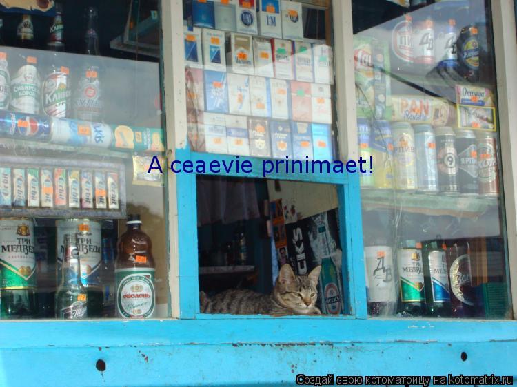Котоматрица: A ceaevie prinimaet!