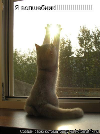 Котоматрица: Я волшебник!!!!!!!!!!!!!!!!!!!