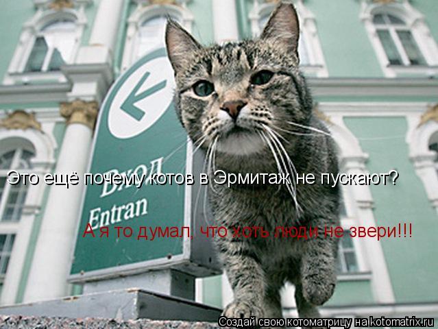 Котоматрица: Это ещё почему котов в Эрмитаж не пускают? А я то думал, что хоть люди не звери!!!