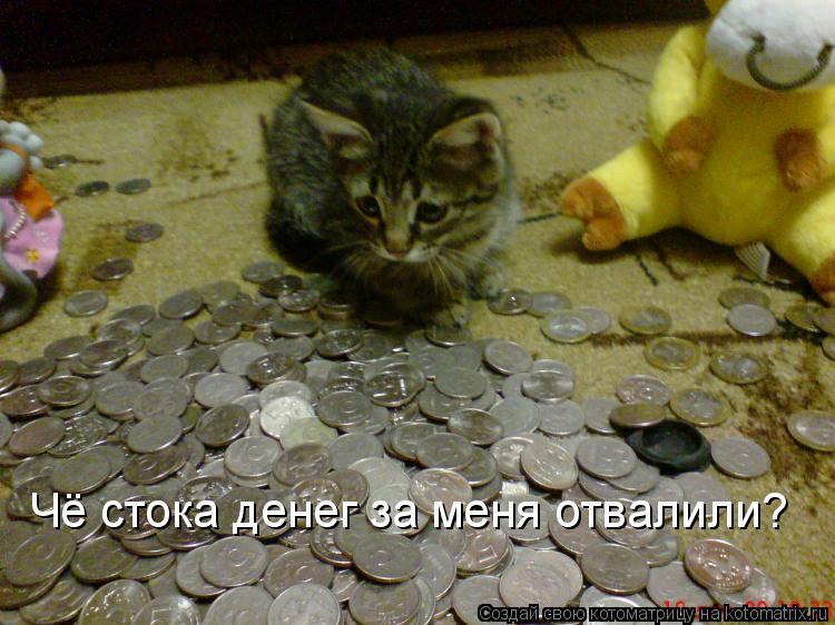 Котоматрица: Чё стока денег за меня отвалили?