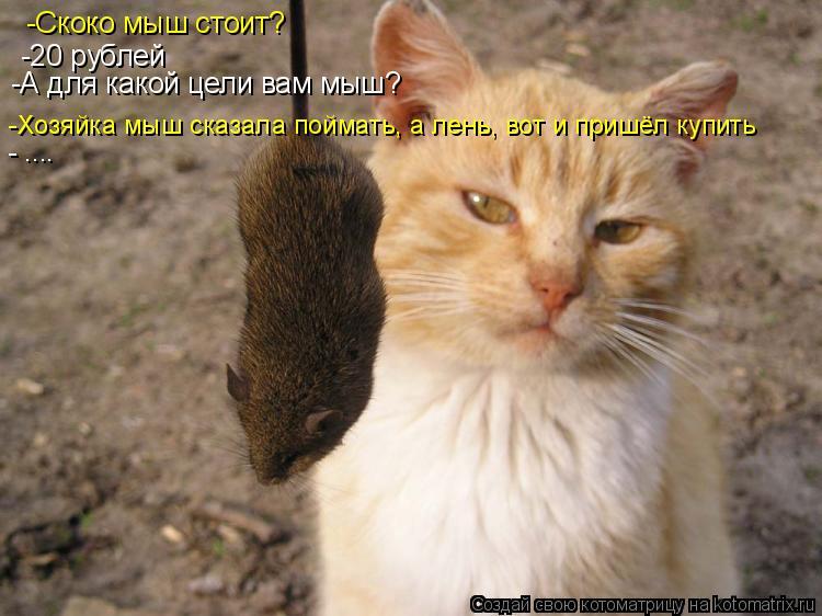 Котоматрица: -Скоко мыш стоит? -20 рублей -А для какой цели вам мыш? -Хозяйка мыш сказала поймать, а лень, вот и пришёл купить - ....