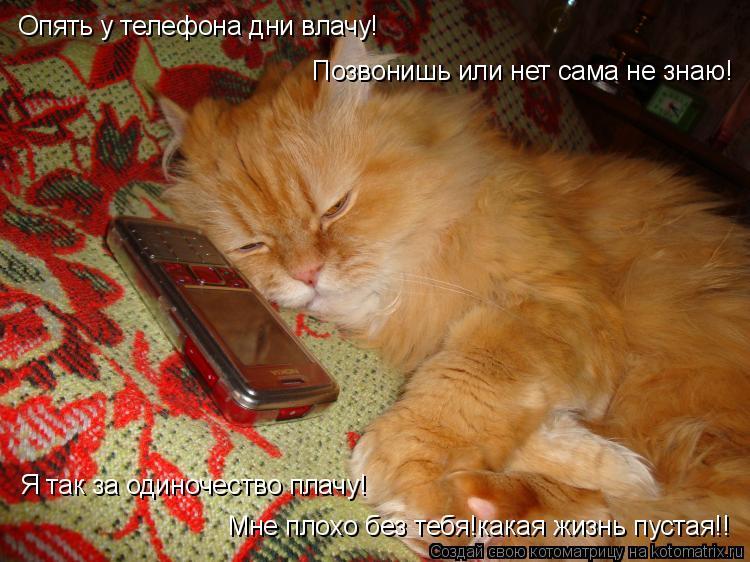 Котоматрица: Опять у телефона дни влачу! Позвонишь или нет сама не знаю! Я так за одиночество плачу! Мне плохо без тебя!какая жизнь пустая!!