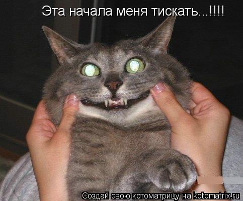 Котоматрица: Эта начала меня тискать...!!!!