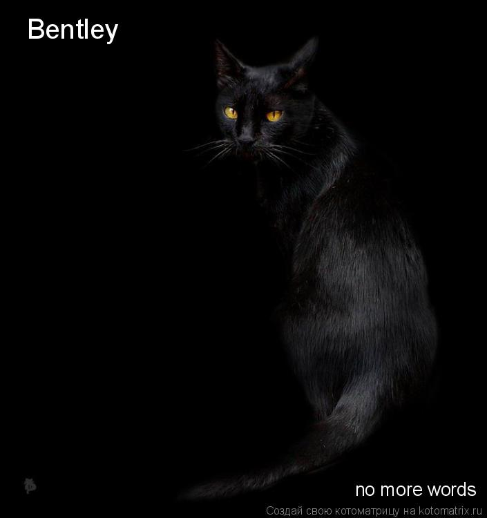Котоматрица: Bentley no more words