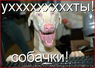 Котоматрица: ухххххххххты! собачки!