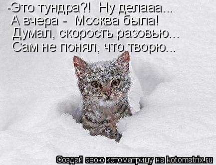 Котоматрица: -Это тундра?!  Ну делааа... А вчера -  Москва была! Думал, скорость разовью... Сам не понял, что творю...