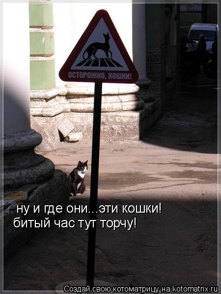 Котоматрица: ну и где они...эти кошки! битый час тут торчу!