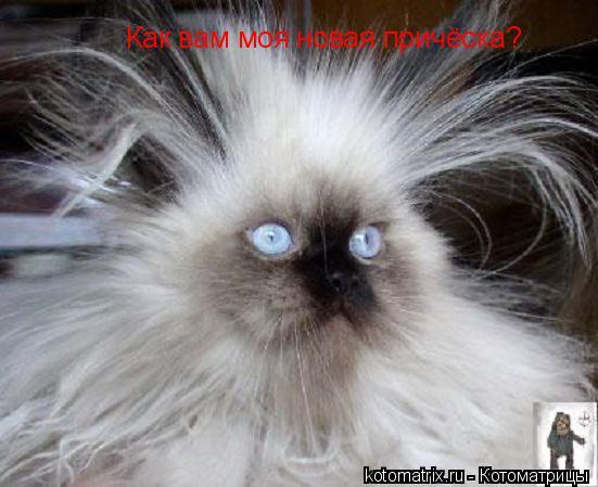 Котоматрица: Как вам моя новая причёска?