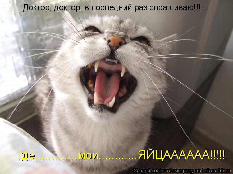 Котоматрица: Доктор, доктор, в последний раз спрашиваю!!!... где.............мои............ЯЙЦАААААА!!!!!