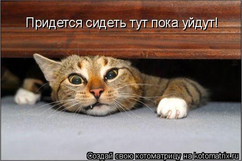 Котоматрица: Придется сидеть тут пока уйдут!