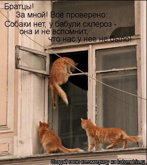 Котоматрица: Братцы! За мной! Всё проверено: Собаки нет, у бабули склероз -  она и не вспомнит,  что нас у нее не было!
