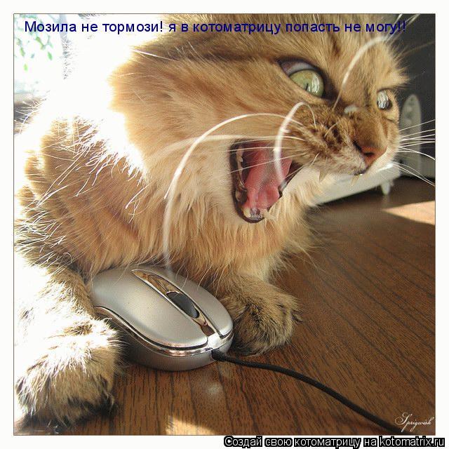 Котоматрица: Мозила не тормози! я в котоматрицу попасть не могу!!