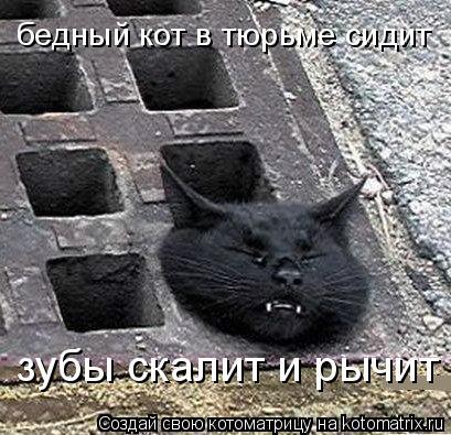 Котоматрица: бедный кот в тюрьме сидит зубы скалит и рычит