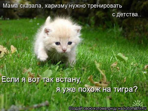 Котоматрица: Мама сказала, харизму нужно тренировать  с детства.. Если я вот так встану, я уже похож на тигра?
