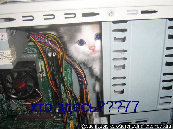 Котоматрица: хто здесь???77