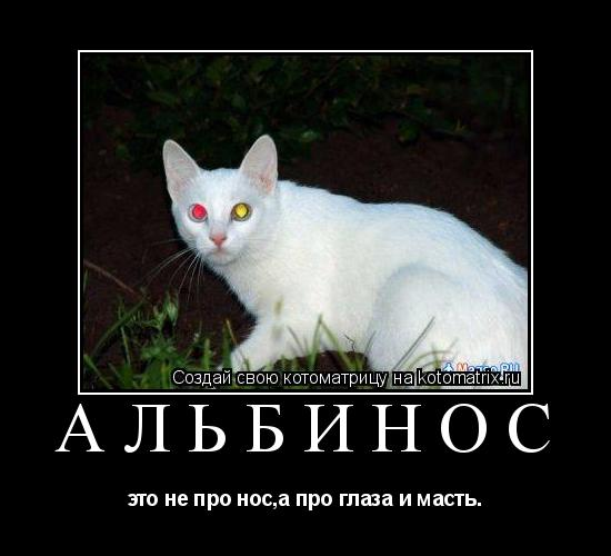 Котоматрица: альбинос это не про нос,а про глаза и масть.