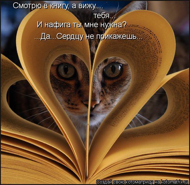 Котоматрица: Смотрю в книгу, а вижу.... тебя... И нафига ты мне нужна? ...Да...Сердцу не прикажешь...
