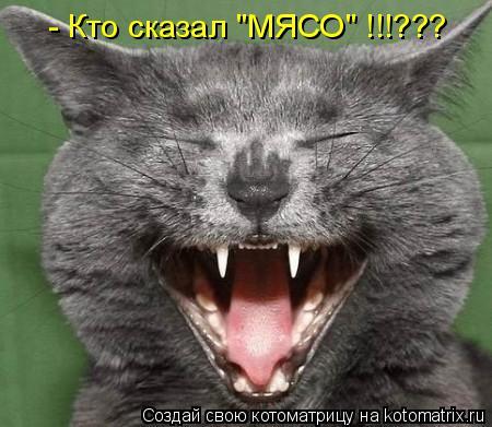 """Котоматрица: - Кто сказал """"МЯСО"""" !!!???"""