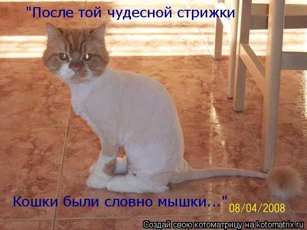 """Котоматрица: """"После той чудесной стрижки Кошки были словно мышки..."""""""