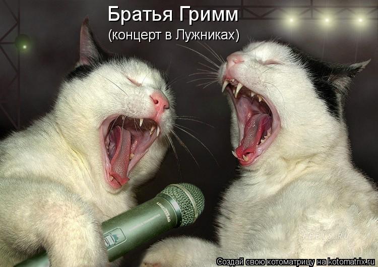 Котоматрица: Братья Гримм (концерт в Лужниках)